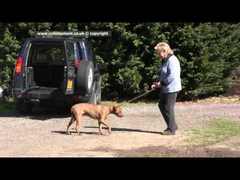 DOG EXPERT WITNESS