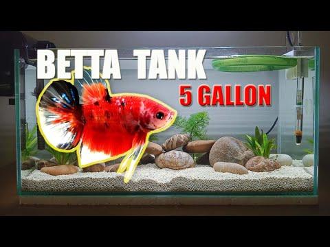 SETTING UP Simple  BETTA TANK 5 GALLON