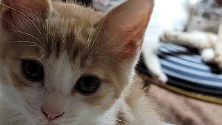 [고양이] 그리고 마늘까기 #2