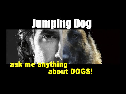 Stop Your Dogs Jumping - ask me anything -  Dog Training Video