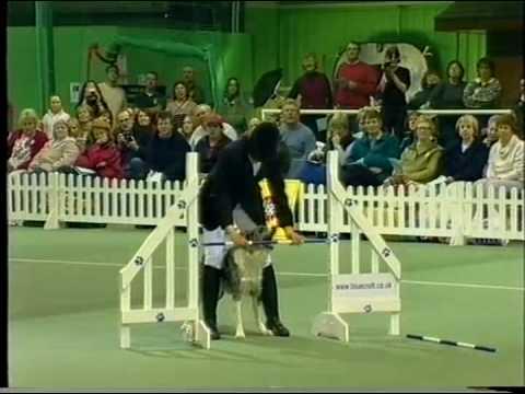 Tina Humphrey - Canine Freestyle.