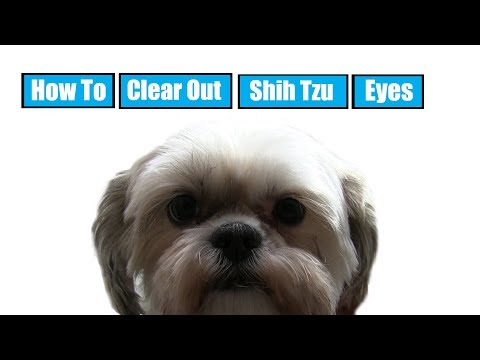 How To Clear Out Shih Tzu Eyes