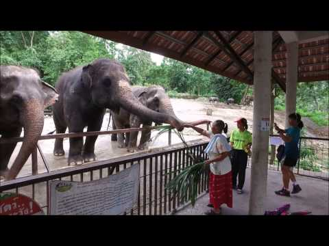 Khao Kheow Open Zoo Thailand
