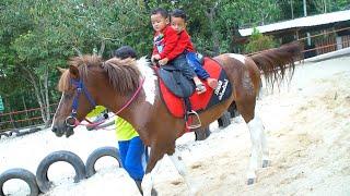 Zafi Naik Kuda Lucu | Kuda Poni | Kuda Delman Lagu Anak
