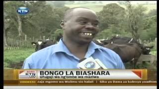 Bongo la biashara: Ufugaji ng'ombe wa maziwa