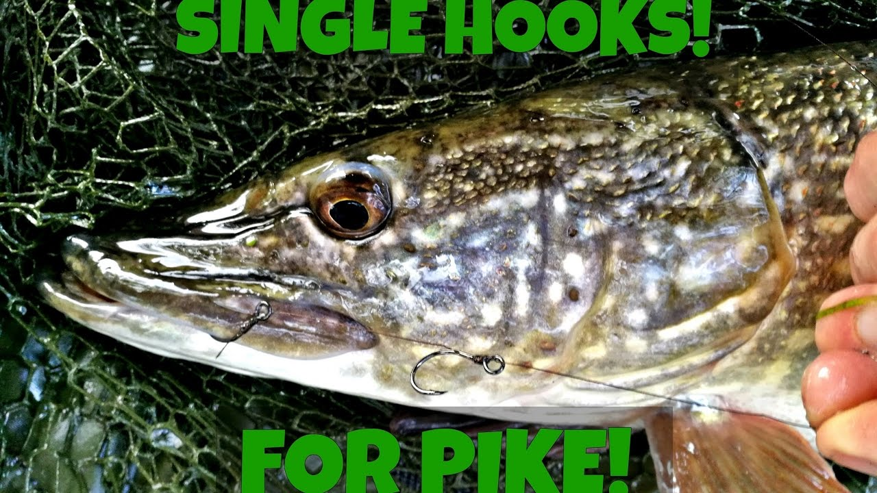 meet pike singles Esoxonly, blog, techniques, books, tackle, and everything you've always wanted to know about muskie & pike.