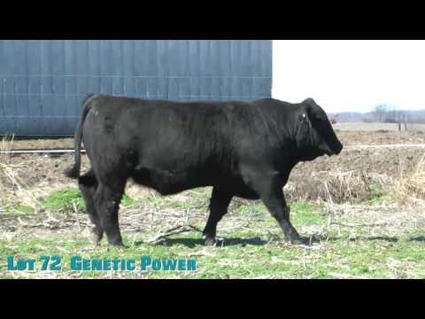 Lot 72  Genetic Power
