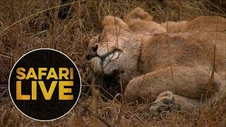 safariLIVE - Sunrise Safari - August 10, 2018