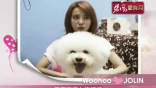 jolin 與woohoo 狗狗 比熊犬