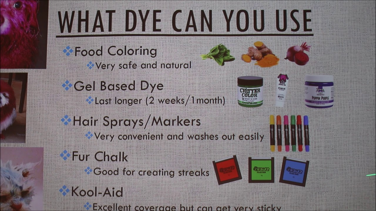 How To Dye Dog Hair Including Health Considerations Youtube