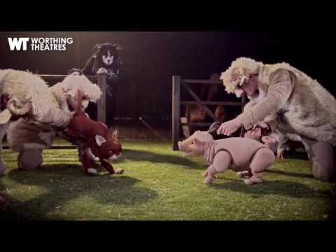 Interview with Babe the Sheep Pig and Matthew Forbes