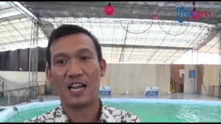 Lumba lumba Ancol Show di Batam