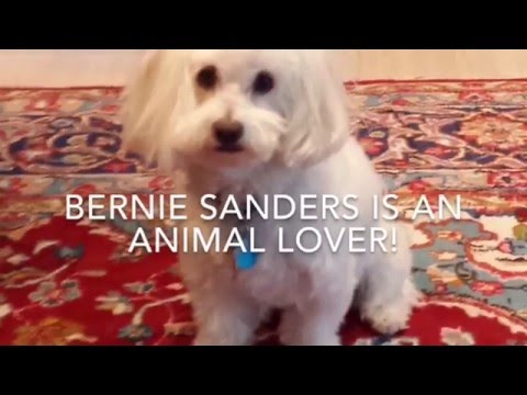 Bernie Sanders for President 2016 Columbus, Ohio stb1 mp4