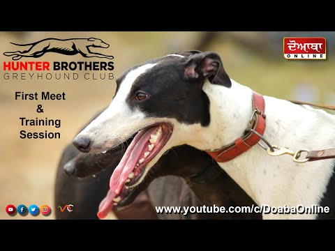 GREYHOUND TRAINING SESSION || HUNTER BROTHERS || MEMBERS MEET & DOG TRAINING || NEW DOG RACE 2020