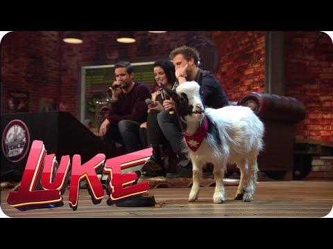 The Voice Pets - LUKE! Die Woche und ich