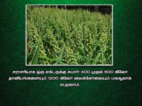 Pon Vilaiyum Bhoomi (14/02/2020) Agri Advisories Notes: