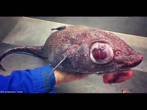 Russian Marine Scientist Shares The World's Freakiest Fish