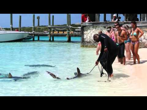 Shark Feeding at Ship Channel Cay