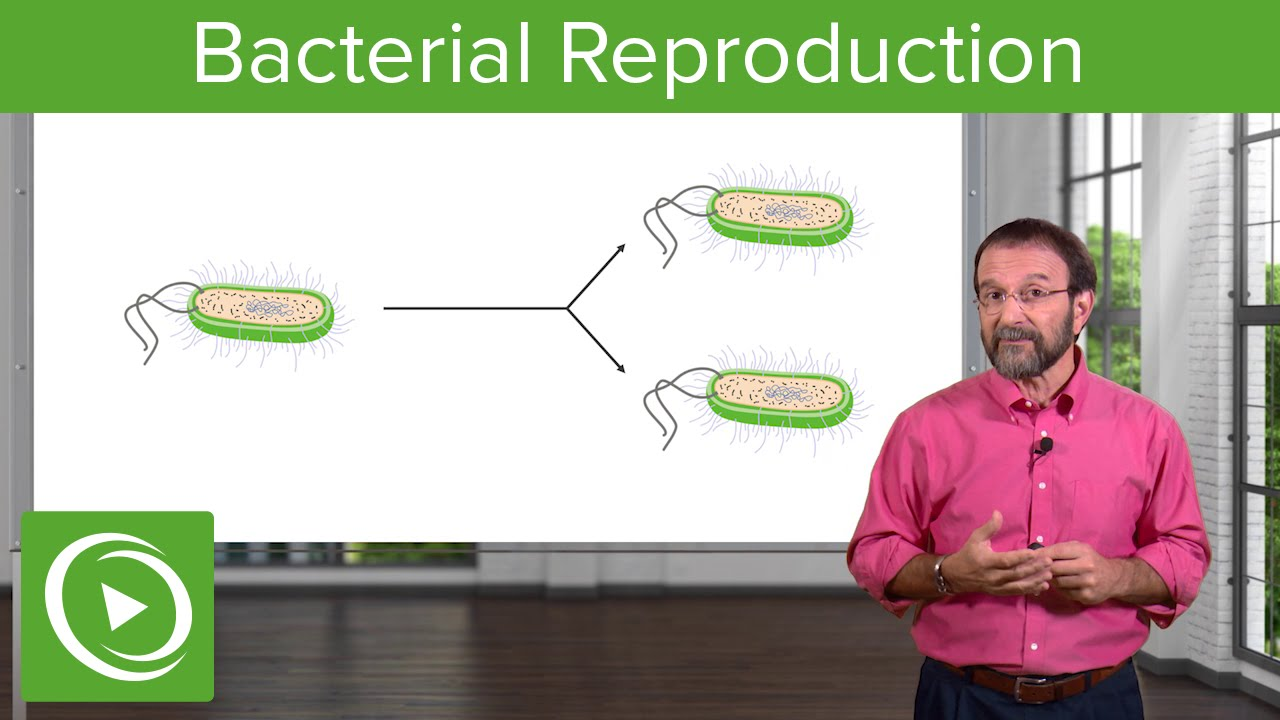 Bacterial Reproduction: Heterotrophy & Autotrophy – Microbiology | Lecturio