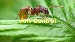 Rodent Control Aubrey TX 76227 Termite Treatment