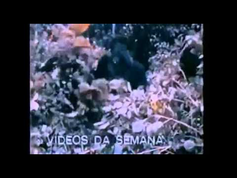 COMERCIAL FM TV - 1984 - REDE MANCHETE