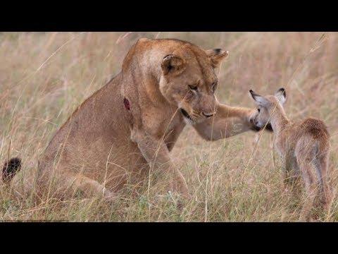 TOP 10 Increíbles Animales Salvando A Otros Animales  || TOP 10 V�DEOS