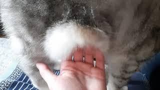 У кота висит жирок. Трясем животом.
