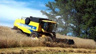 Żniwa 2013 - Żyto z Szerszeniem - New Holland CSX 7060   Ursus 1634
