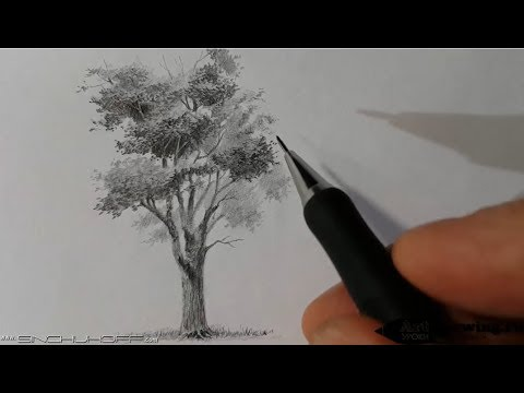 Как рисовать дерево поэтапно карандашом