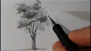 как нарисовать поэтапно дерево карандашом . Урок для начинающих