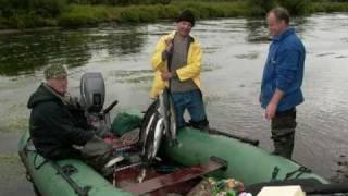 Рыбалка Камчатка. Рыбалка на Камчатке видео.(На Камчатке заядлыми рыбаками становятся даже самые равнодушные. Лососи весом 7-20 килограмм - явление обычн..., 2010-03-10T19:12:51.000Z)