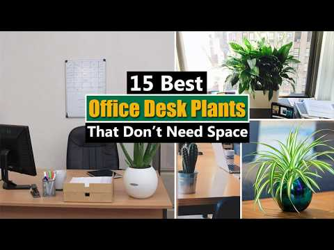 15 Best Office Desk Plants That Don't Need Space