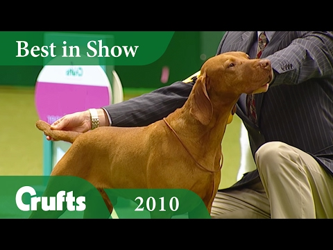 Hungarian Vizsla wins Best In Show at Crufts 2010 | Crufts Classics