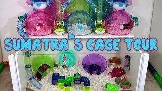 Sumatra's Hamster Cage Tour - May 2014