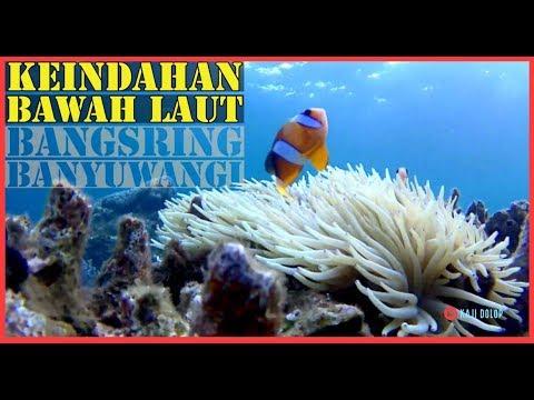 melihat-keindahan-bawah-laut-di-bangsring-banyuwangi---underwater-in-bangsring