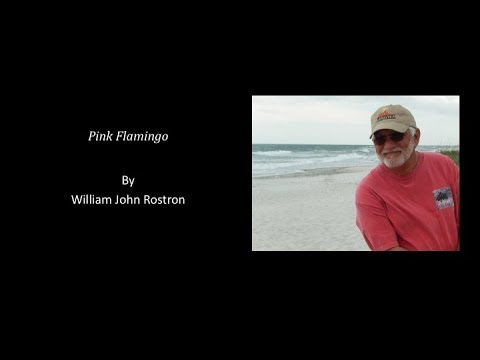 Pretty Flamingo, written by William John Rostron and performed by Robert Montano