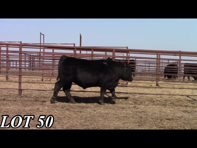 Mead Angus Farms Lot 50