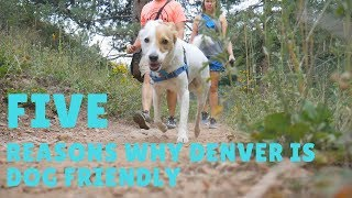 5 Reasons Denver is Dog Friendly \\ Couple of Locals