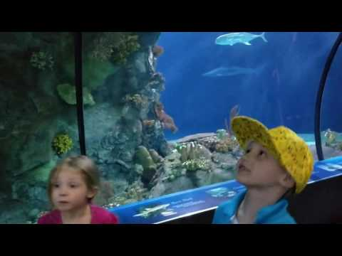 Omaha Henry Doorly Zoo Aquarium & SHARKS!!!