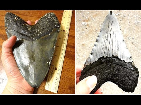 5 Best Places To Find Megalodon Teeth