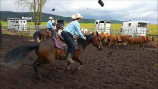 Ranch sorting 3