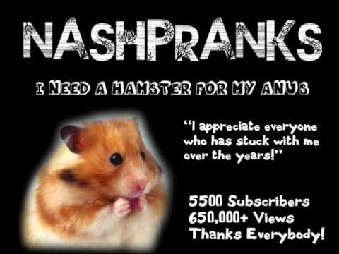 Hampster up anus
