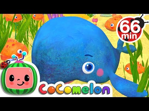 Baby Blue Whale   More Nursery Rhymes & Kids   Cocomelon ABCkidTV
