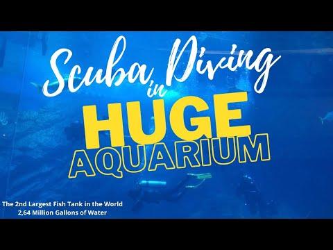 Divers on huge aquarium || dubai mall