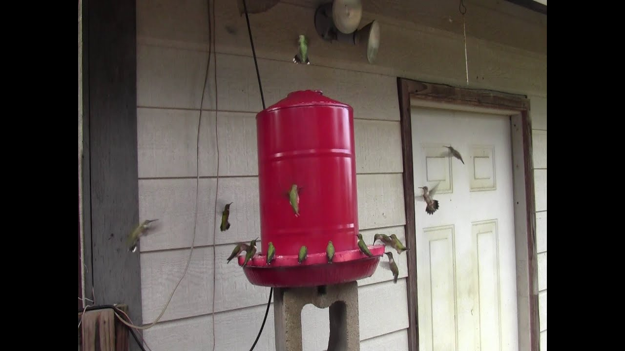 Diy 5 Gallon Hummingbird Feeder Youtube