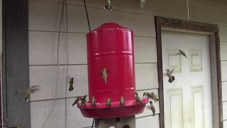 Diy 5 Gallon Hummingbird Feeder