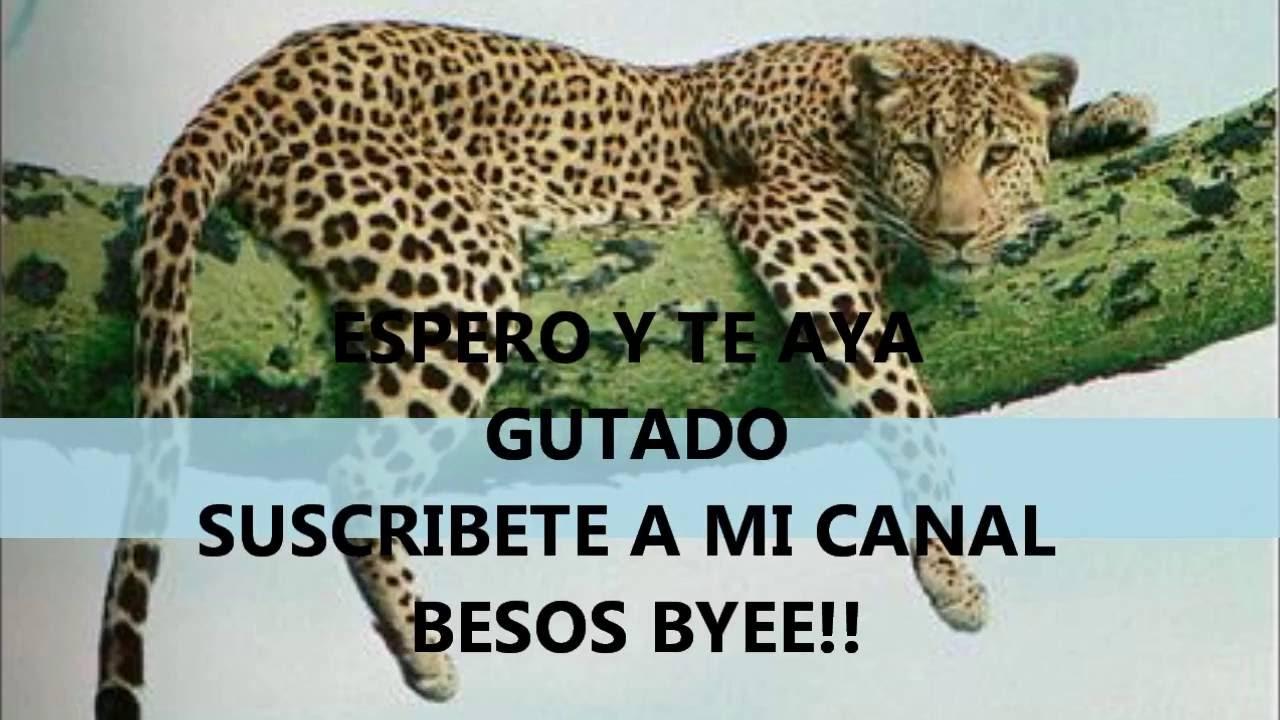 Diseño de uñas en forma de leopardo! MUY FÁCIL!! - YouTube