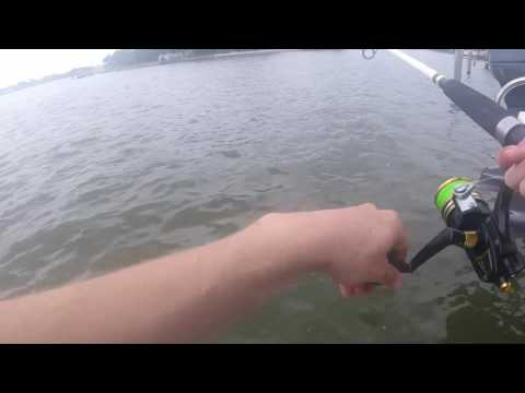 Indian Rocks Beach Dock+Surf fishing Summer 2017