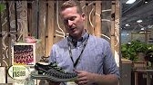 02cf63224f05 Keen Shanti Arts Sandals - Slip-Ons (For Men) - YouTube