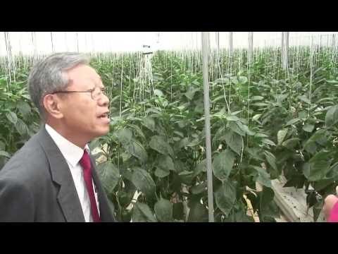 CGNF Sweet Pepper Farm Tour in Korea